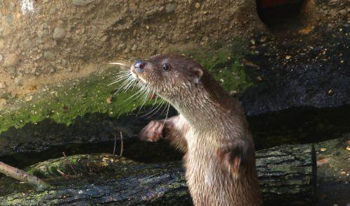 Bonifác, foto: Kateřina Misíková, Zoo Plzeň